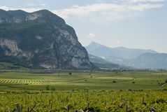 Vineyards in Trento. View of the vineyards of trento Stock Images