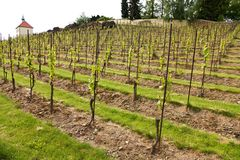 Vineyards in troja Stock Photos