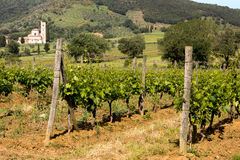 Vineyards and Tuscan abbey Stock Photography