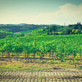 Vineyards Royalty Free Stock Photos