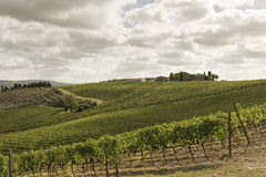Vineyards in Tuscany Royalty Free Stock Photo