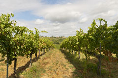 Vineyards in Tuscany Stock Image