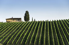 Vineyards in Tuscany Royalty Free Stock Photos