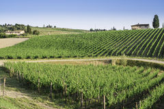 Vineyards in Tuscany Stock Photo