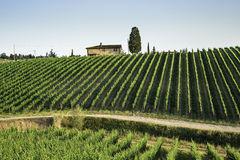 Vineyards in Tuscany Royalty Free Stock Photography