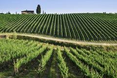 Vineyards in Tuscany royalty free stock photo