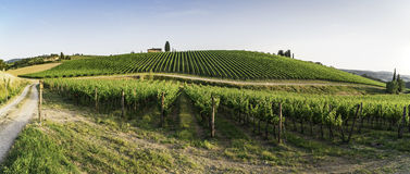 Vineyards in Tuscany Royalty Free Stock Image