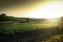 Vineyards in Tuscany Royalty Free Stock Images