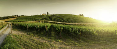 Vineyards in Tuscany. Farm house at sunset. Panoramic view Stock Photography