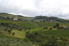 Vineyards in the Tuscany Royalty Free Stock Photo