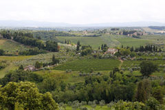 Vineyards in the Tuscany Stock Photography