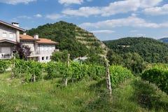 Vineyards in Tuscany Italy Royalty Free Stock Photography