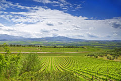 Vineyards in Tuscany. Royalty Free Stock Images