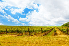 Vineyards in Tuscany Italy Stock Photography
