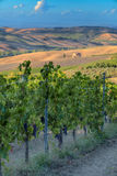 Vineyards in Tuscany Stock Photos
