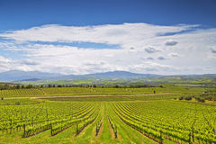 Vineyards in Tuscany at spring day Royalty Free Stock Photography