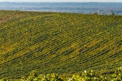 Vineyards in Ukraine stock photos
