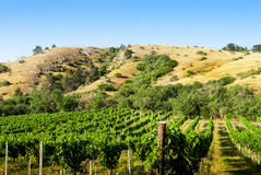 Vineyards under the hill Royalty Free Stock Images