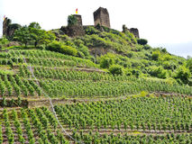 Vineyards under Metternich Castle in Moselle Stock Photography