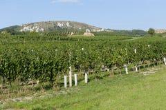 Vineyards under Palava. Czech Republic Royalty Free Stock Image