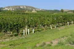Vineyards under Palava. Czech Republic Stock Images