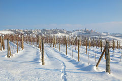 Vineyards under the snow. Royalty Free Stock Photo
