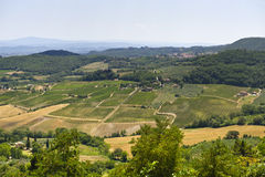 Vineyards in Val d'Orcia Stock Photos