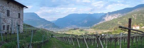 Vineyards in vallagarina valley Trentino stock photos