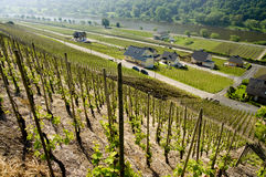 Vineyards in the valley of the Moselle Stock Photo