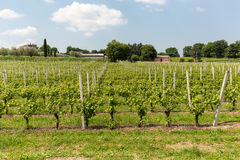 Vineyards in the Valpolicella region in Italy. Royalty Free Stock Photography