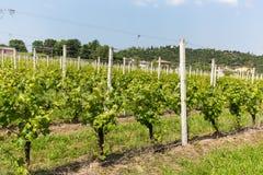 Vineyards in the Valpolicella region in Italy.  royalty free stock photos