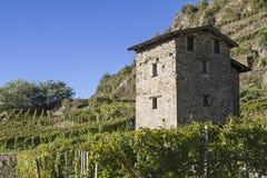 Vineyards in Valtellina Royalty Free Stock Photography