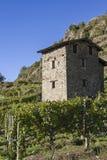 Vineyards in Valtellina Stock Photos