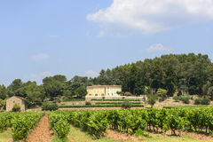 Vineyards in Var (Provence) Royalty Free Stock Image