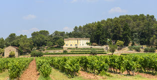 Vineyards in Var (Provence) Royalty Free Stock Photo