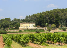 Vineyards in Var (Provence) Stock Images