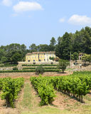 Vineyards in Var (Provence) Stock Photo