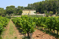 Vineyards in Var (Provence) Royalty Free Stock Images