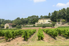 Vineyards in Var (Provence) Stock Photography