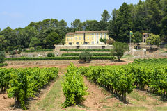 Vineyards in Var (Provence) Royalty Free Stock Photos