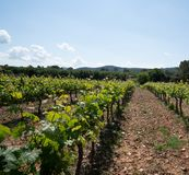 Vineyards in the Var region of Southern France. royalty free stock image