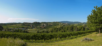 Vineyards of Vencò Slovenia Royalty Free Stock Image