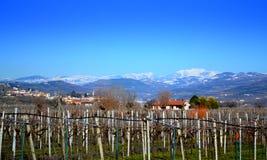 Vineyards Veneto Italy Royalty Free Stock Images