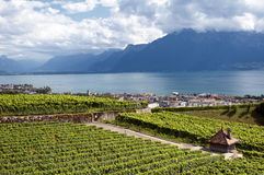 Vineyards of Vevey - Switzerland Royalty Free Stock Images