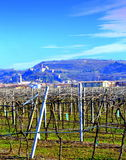 Vineyards view Veneto Italy Royalty Free Stock Photos