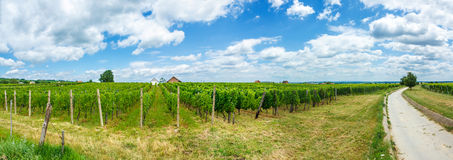 Vineyards in Villány, Hungary, summer of 2015 Stock Photography