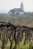 Vineyards and village church at Lake Balaton Royalty Free Stock Image