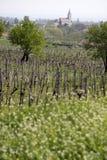 Vineyards and village church at Lake Balaton Stock Photos