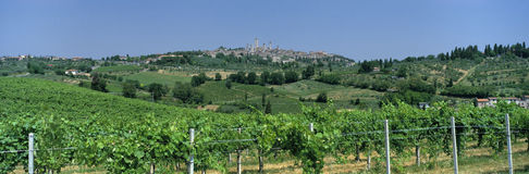 Vineyards and village of San Gimignano, Italy stock photography