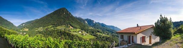 Vineyards Villas and Vistas Stock Images